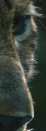 Capture d'écran 2019-05-27 à 15.24.29_mo