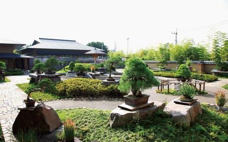 Omiya Bonsai Museum