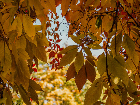 Herbst mit der Familie - unsere Bucket List