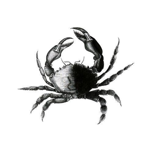 Crab on Tile