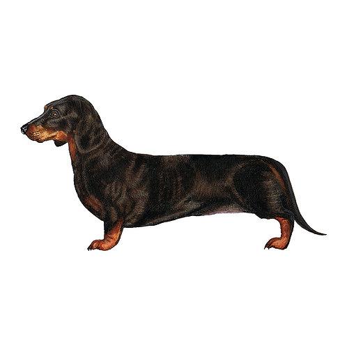Splitted Sausage Dog