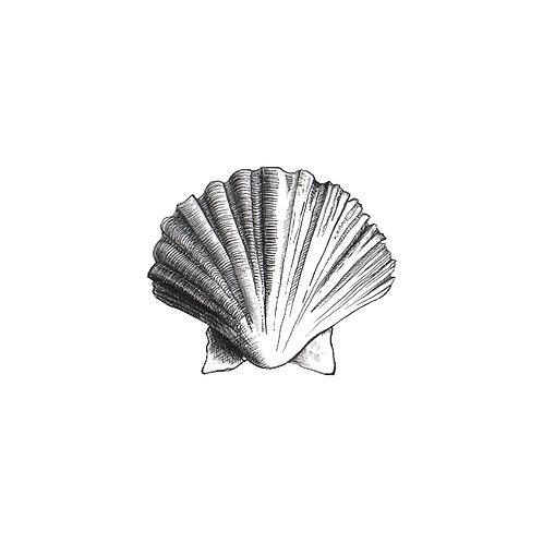 Shell on Tile