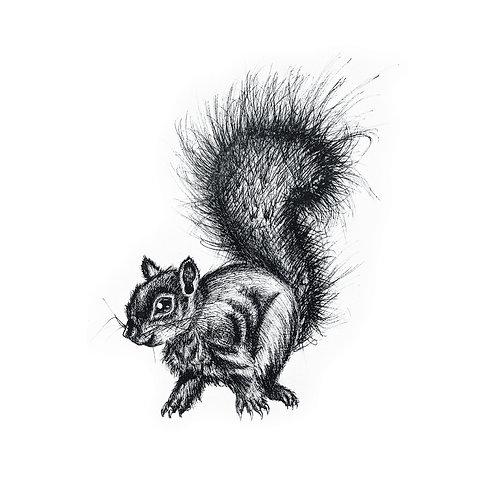 Squirrel on Mug