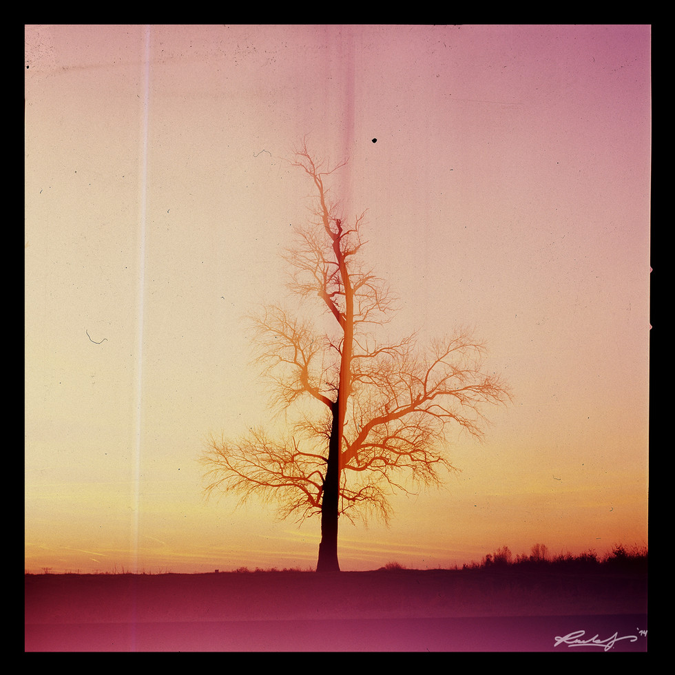 Mr. Lonely tree project