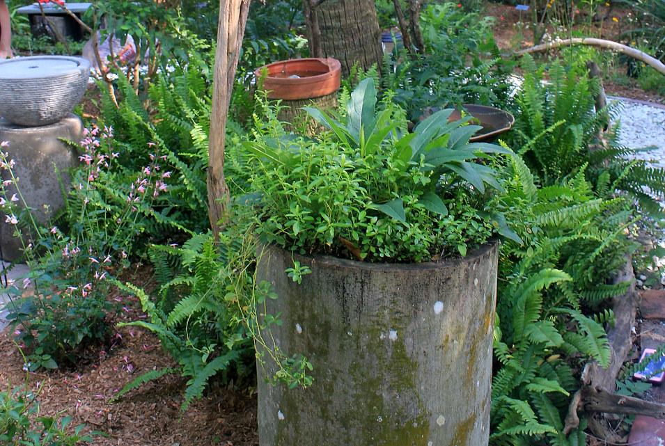 Coates - imaginative plantings