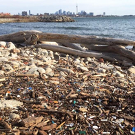 Plastic on a beach in Humber Bay Park West in Toronto