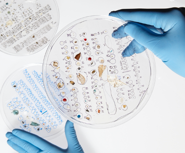 Microplastics Sorted in Laboratory.png