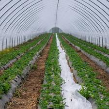Interior of greenhouse.jpg