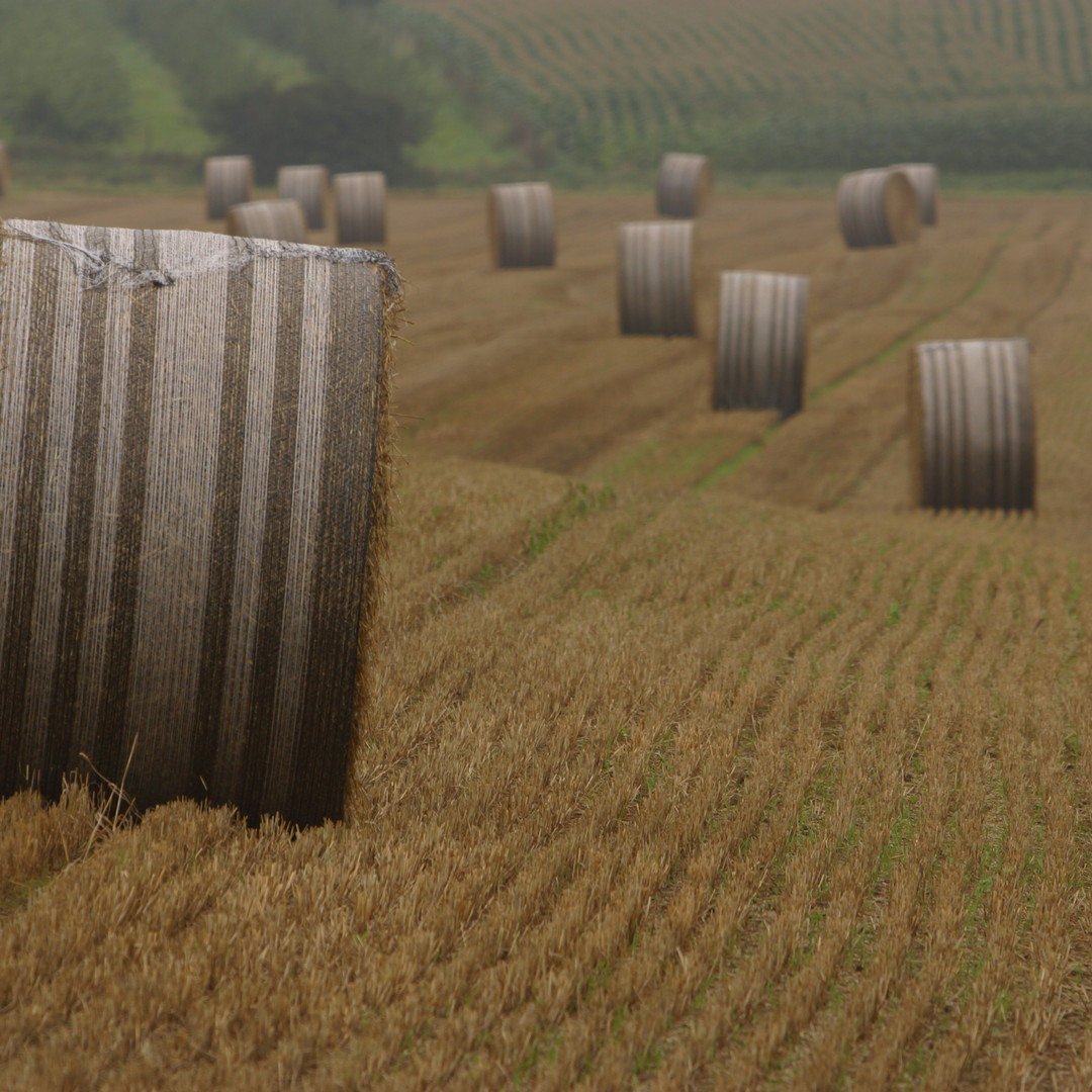 Wrapped hay bales.jpg