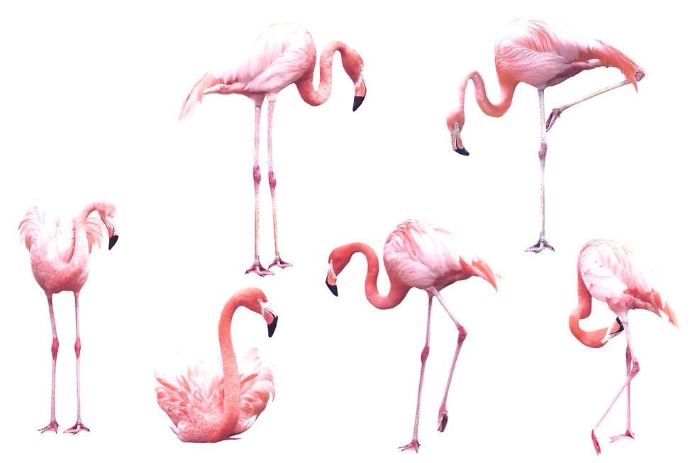 Flamingo%20Poster_edited.jpg