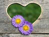 heart-1562351_640.jpg