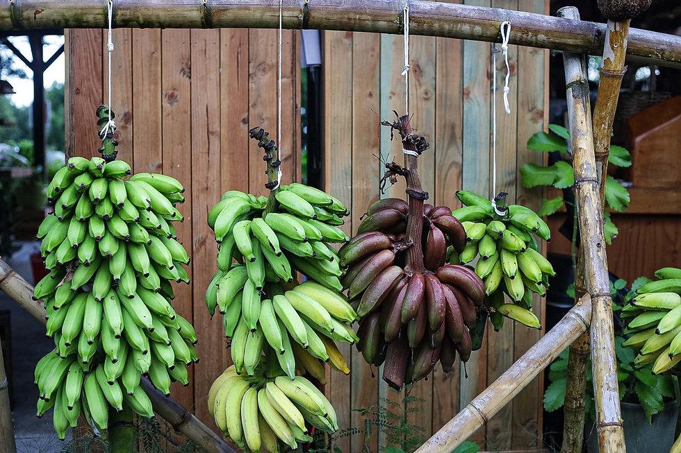 Rack of bananas at Hana Farms stand