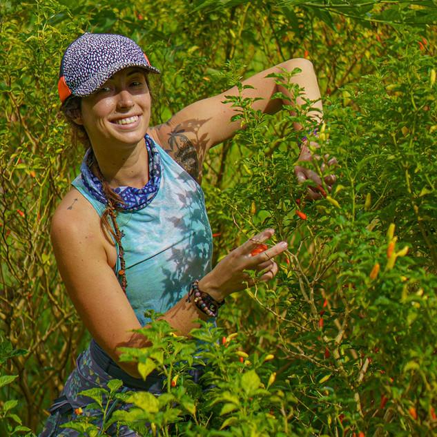 Hana Farms Work-trader