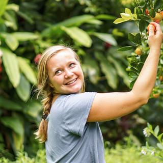 Hana Farms Work-trader Harvest