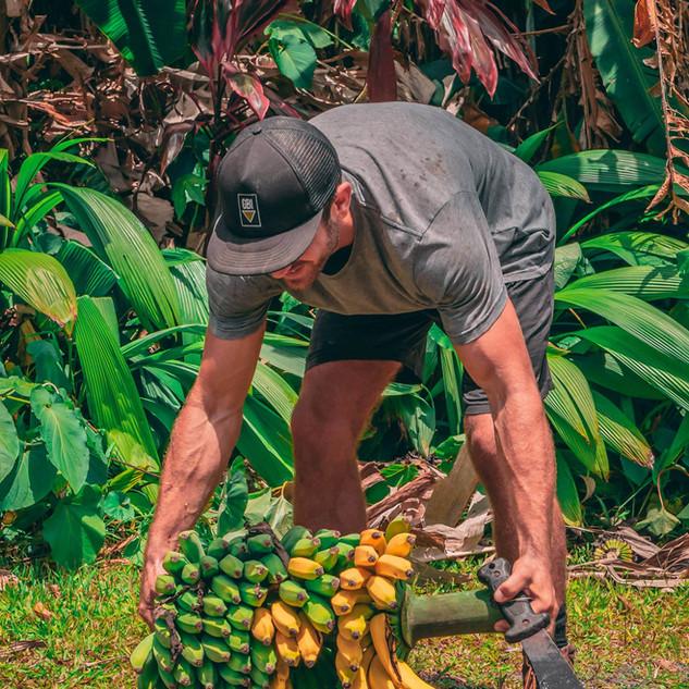Hana Farms Work Trader and Banana Bundle