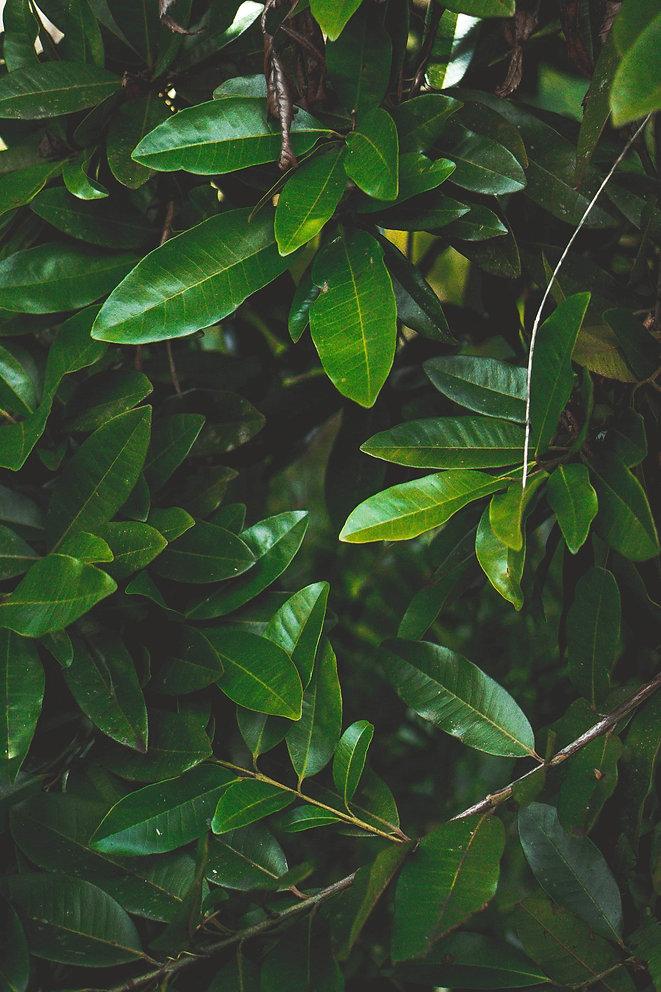 Hana Farms Green Leaf Background