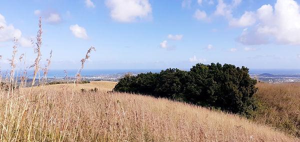View on north.jpg