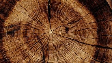 trunk_tree_texture_119590_3840x2160.jpg