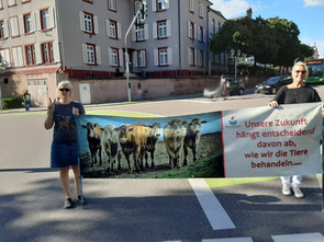 24.08.2020 Ampelaktion in Offenurg Thema Tiertransporte und Massentierhaltung