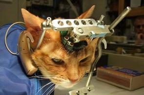Online Pedition gegen Tierversuche