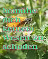 Vorstellung_Doreen_edited.jpg