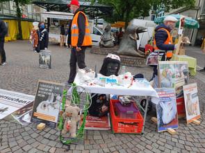 Infoveranstaltung gegen Tierversuche in der Corona Krise 2020