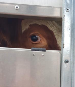 Schlachthof Mahnwache in Freiburg Animals Save Januar 2020