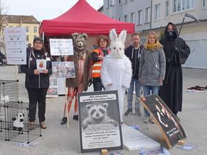 Infostand Anti Pelz und gegen Kaninchenzucht Februar 2020