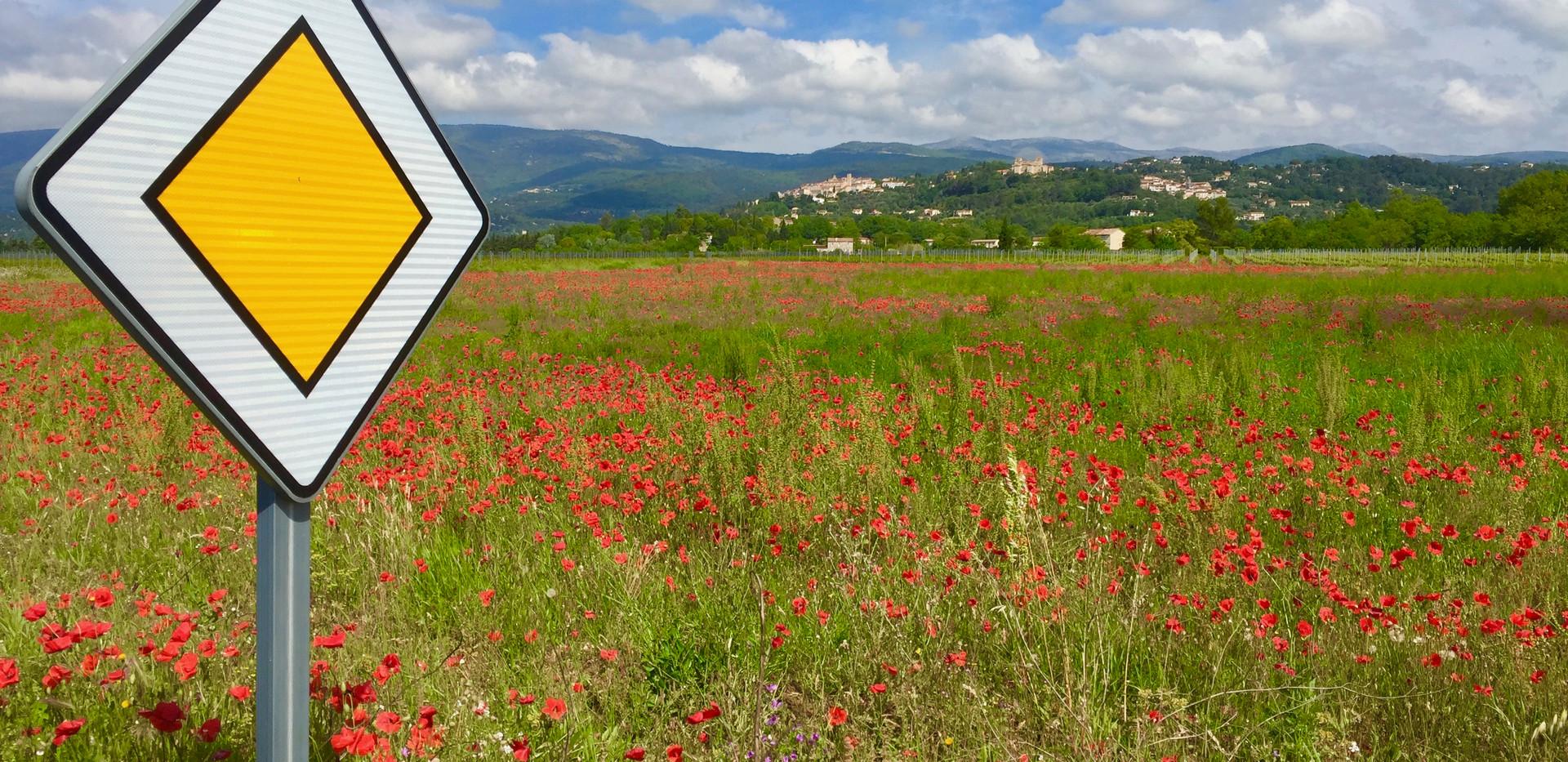 Poppies Ahead.