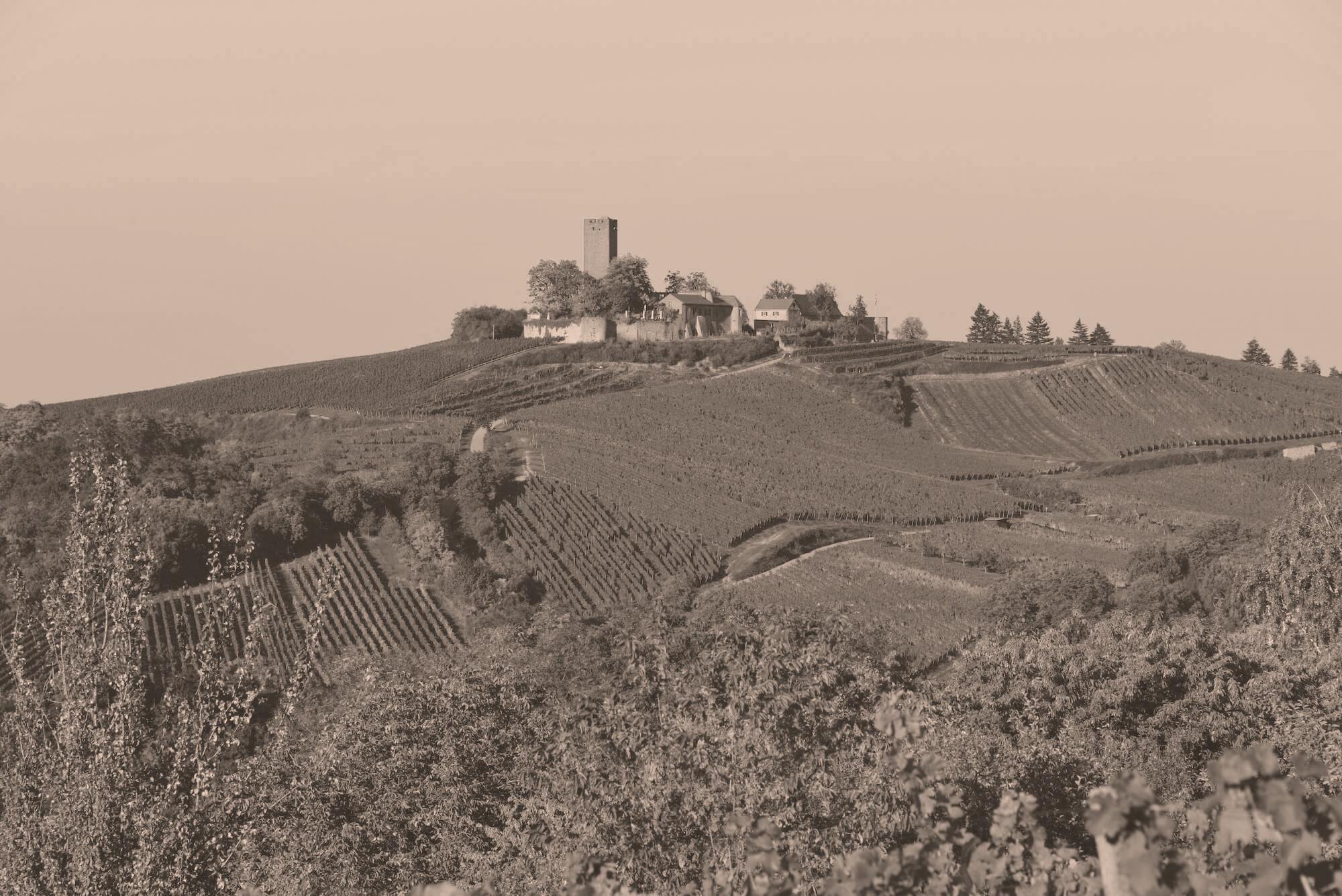 Burg Ravensburg und Weingut Heitlinger
