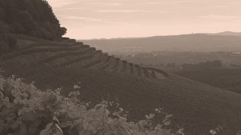 Einzellage vom Weingut des Grafen Neipperg