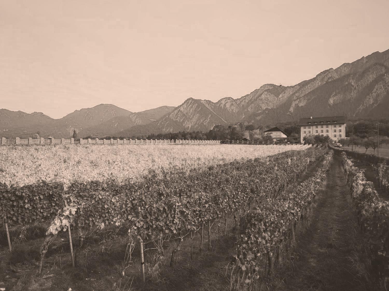 Weinbau von Tscharner I Schloss Reichenau I Gian-Battista und Johann Baptista von Tscharner