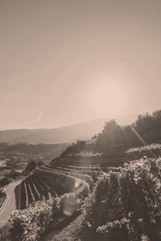 Sommer in den Walliser Weinbergen