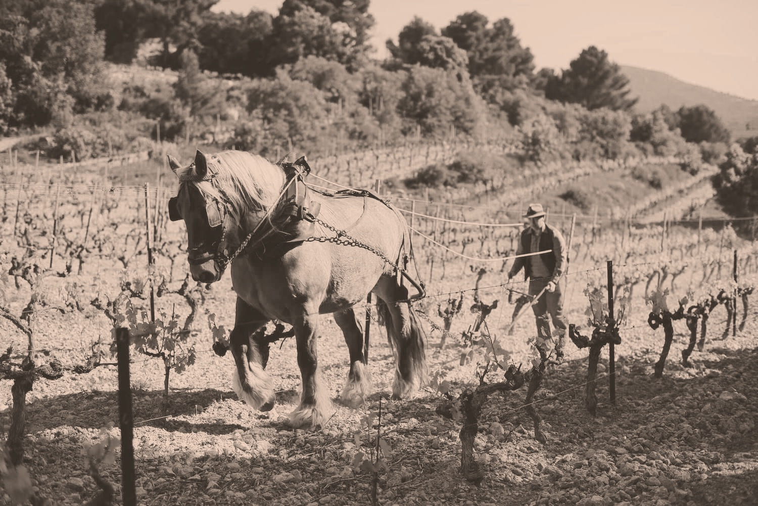 Domaine Martinelle