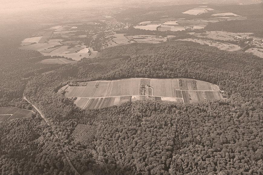 Panoramabild {Winzer}