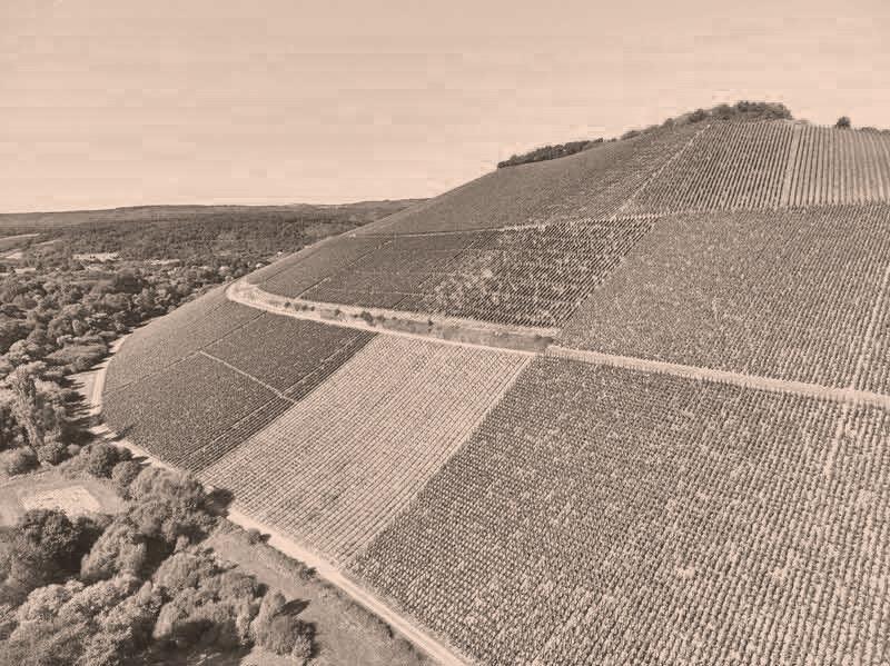 Scharzhofberger Riesling vom Weingut von Hövel