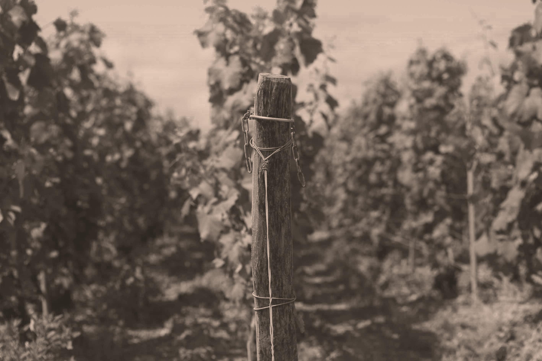 Bio-Wein aus der Champagne von Louis Roederer