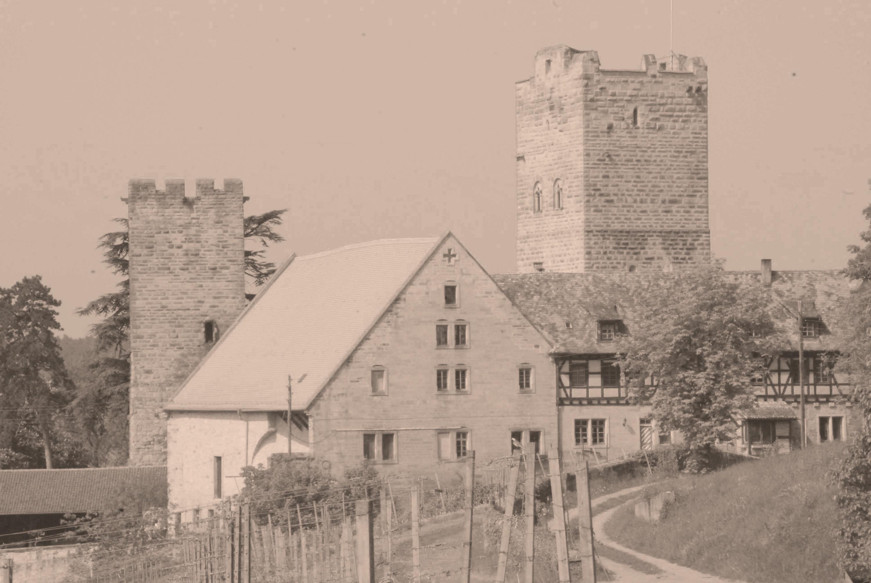 Burg Neipperg mit Reben