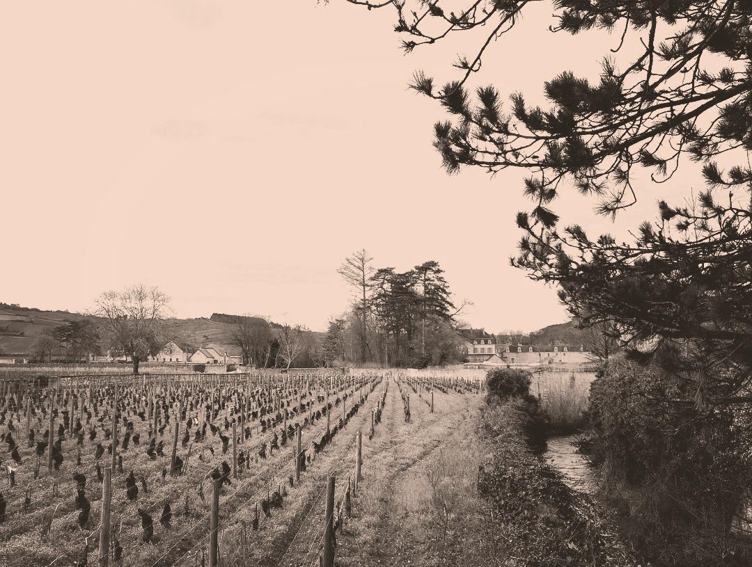 Domaine Rougeot I Meursault I Burgund I Pierre-Henri Rougeot I Marc Rougeot