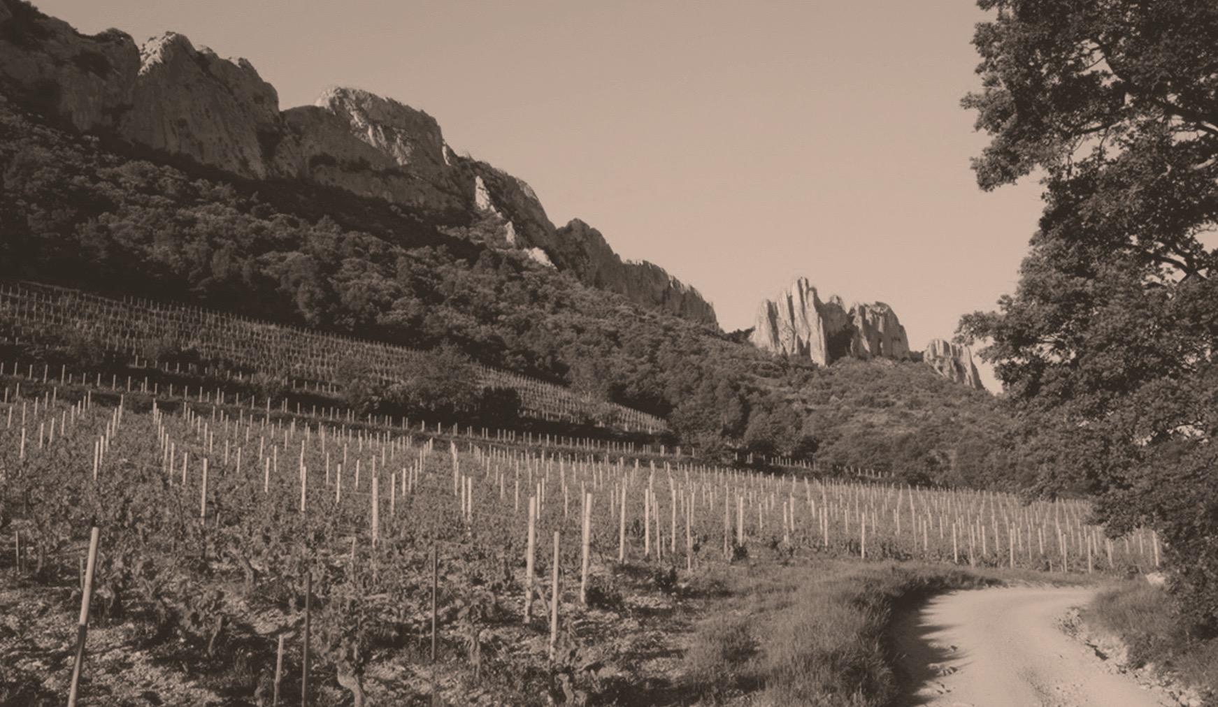 Domaine la Bouissière I Thierry Faravel I Französischer Wein