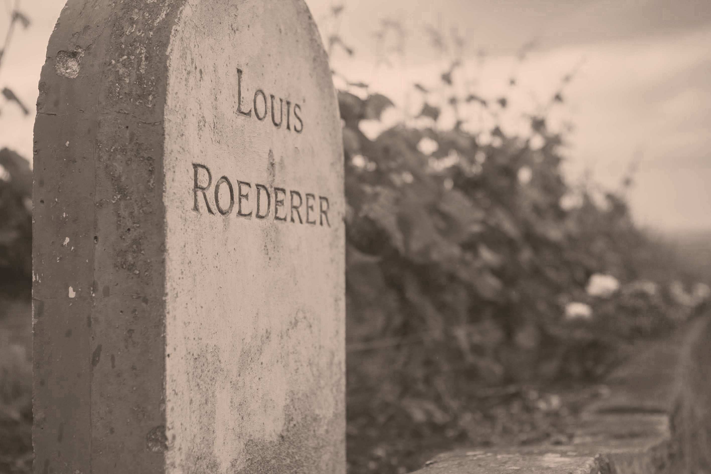 Weinberge von Louis Roederer