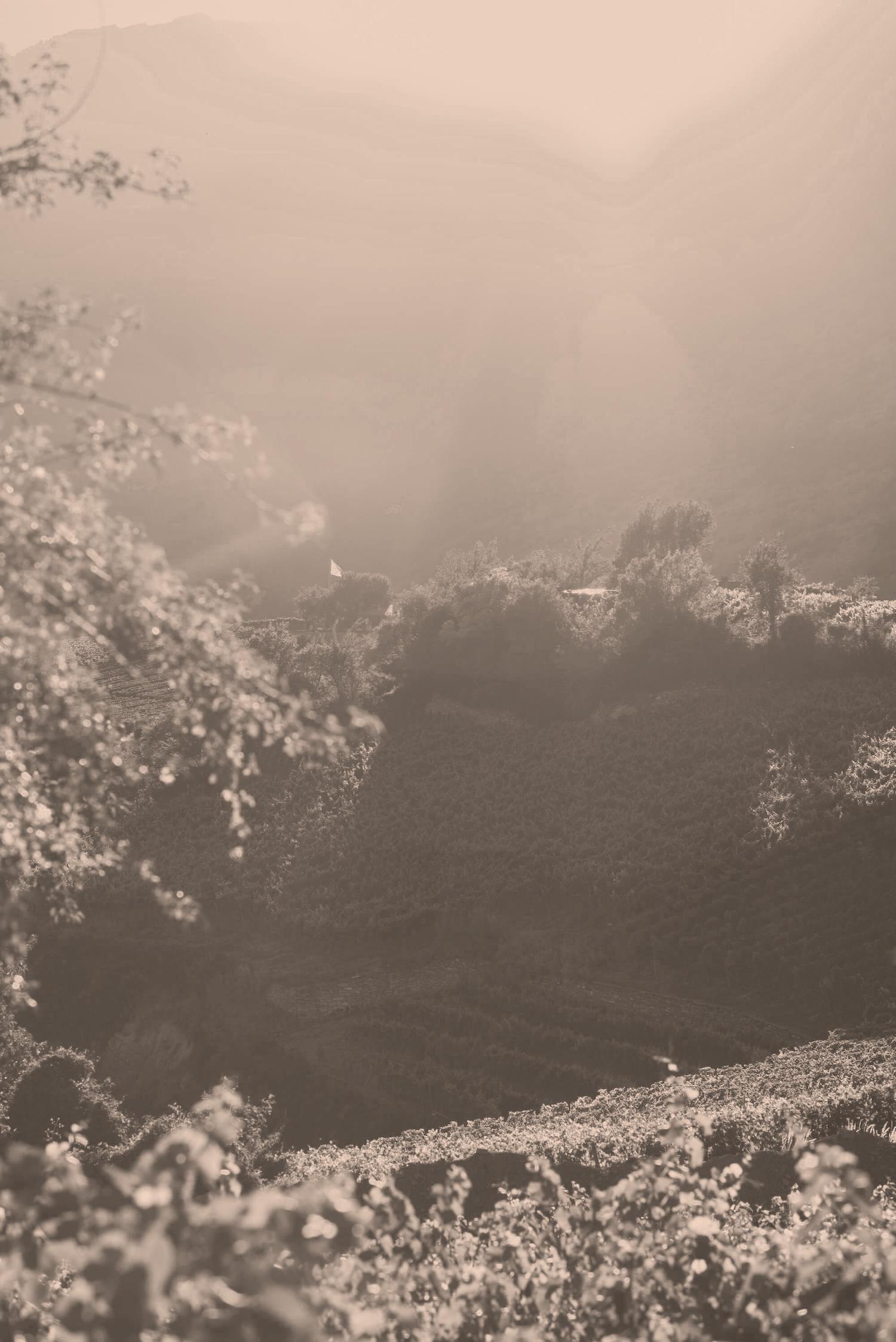 Natur im Weinberg von Albert Mathier