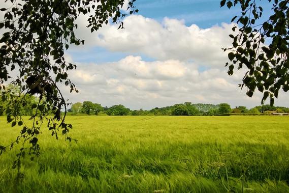 Inset 3 - Thurton Views.jpg
