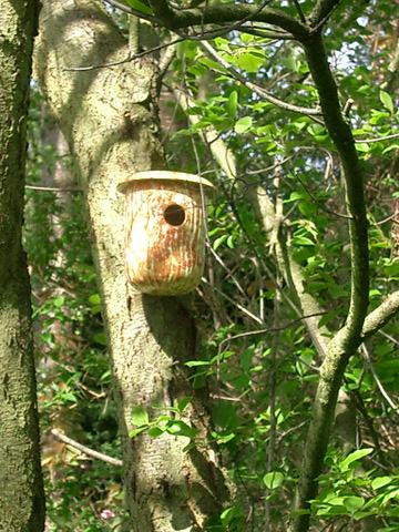 Bird House 05