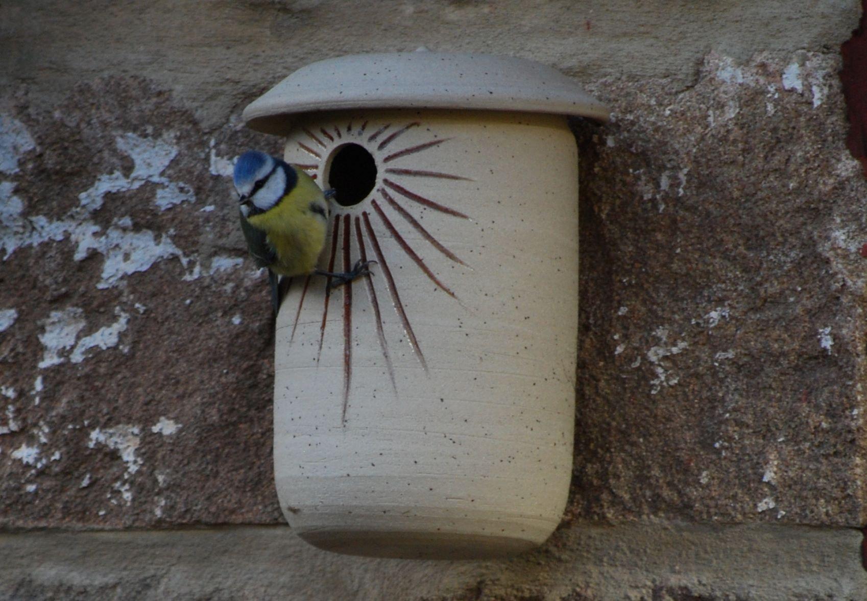 Bird House 06