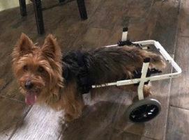 DM-dog_wheelchair.jpg