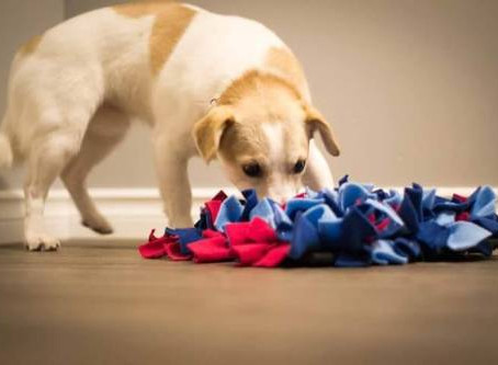 CANINE ENRICHMENT: WHY YOUR DOG NEEDS IT & HOW TO DO IT BETTER