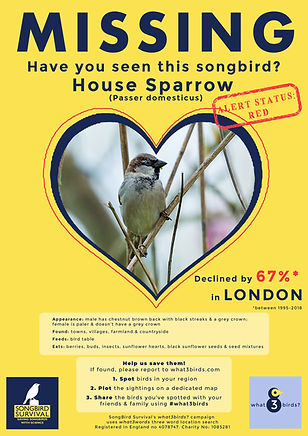 LONDON, House Sparrow, Missing Poster, S