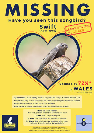 WALES, Swift, Missing Poster, SongBird S