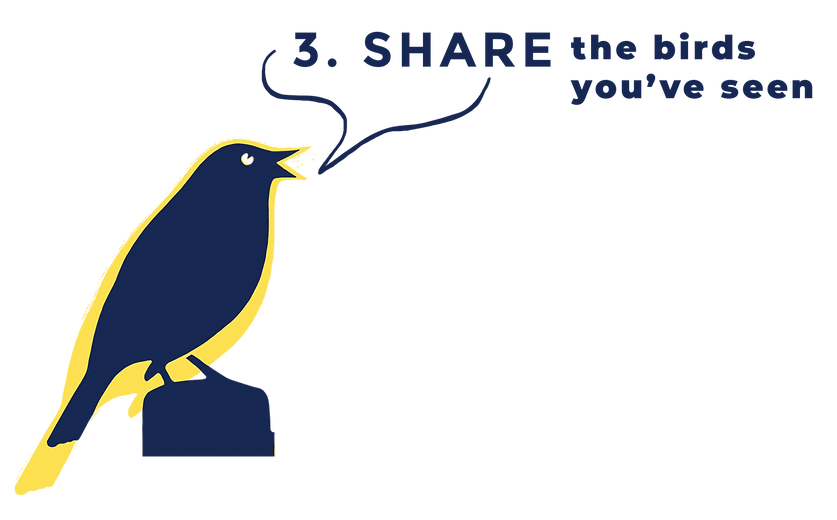 3 SHARE What3birds.png
